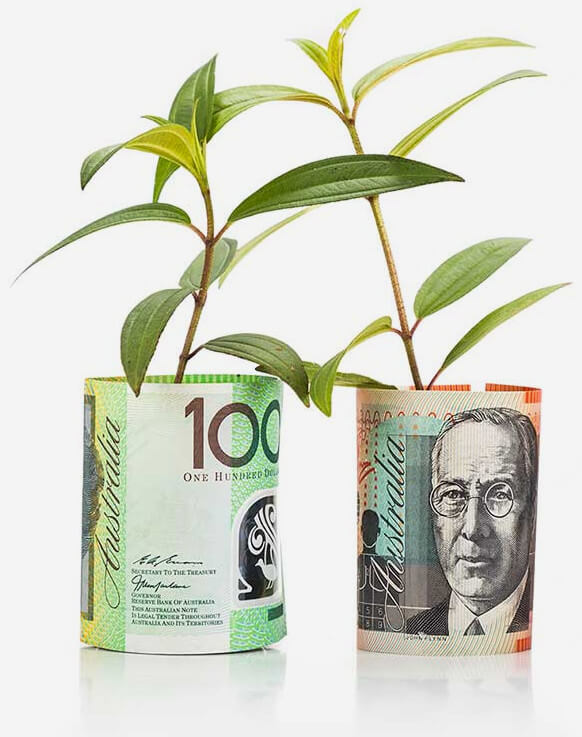 Money Tree Insurance Matters QLD